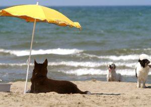 Pesaro cane mare multa