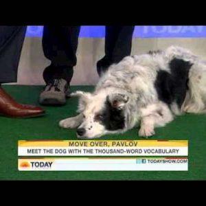Chaser, Il cane più intelligente del mondo è morto. Era una lei, aveva imparato 1022 parole