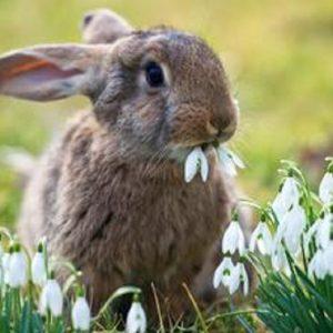 Un coniglio in una foto Ansa