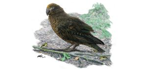 Ercole, pappagallo preistorico gigante dalla Nuova Zelanda