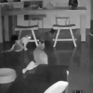 gatti terremoto taiwanatt