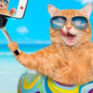 Gatto & alloggio: la vacanza gratis