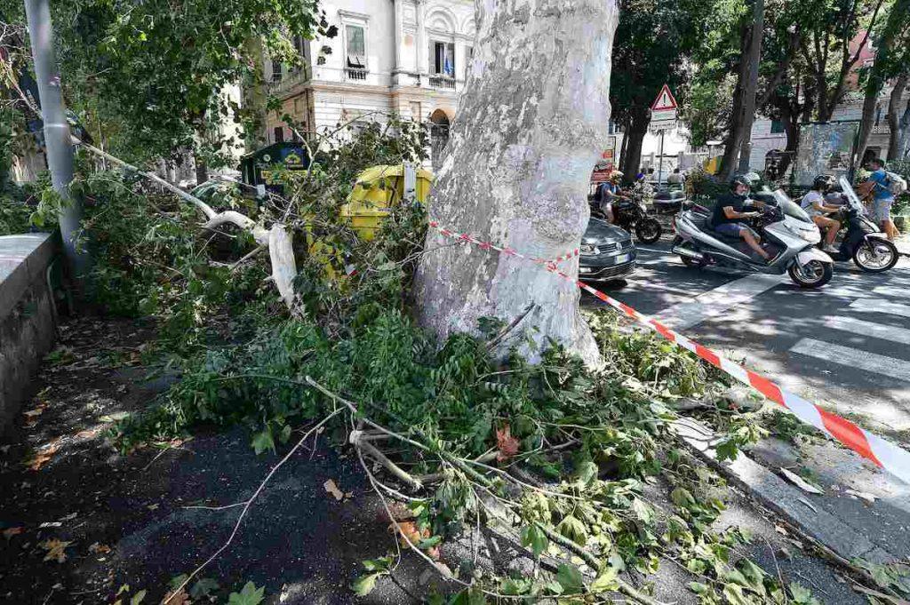 Genova albero caduto piazza mazoni