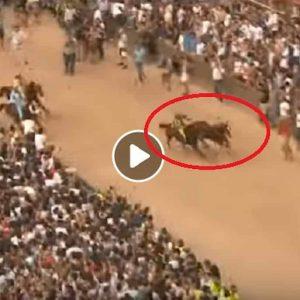 Palio di Siena 16 agosto 2019, la Selva vince col cavallo scosso: Remorex trionfa senza fantino VIDEO