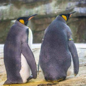Pinguini gay zoo berlino
