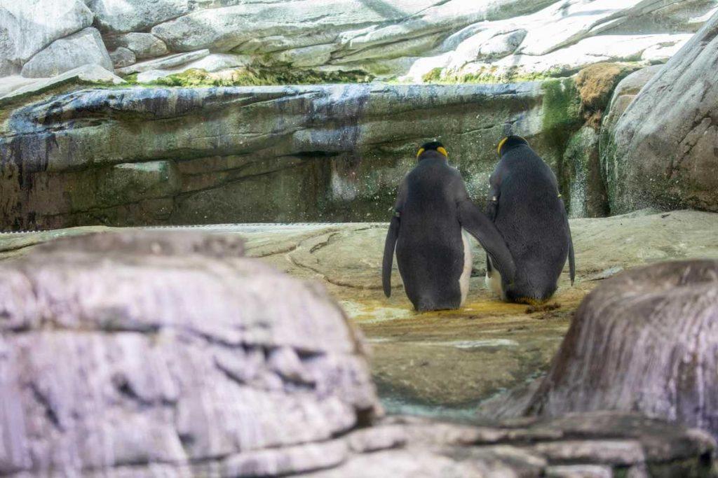 pinguini zoo berlino