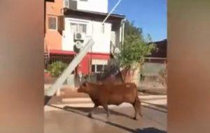 toro semina il panico in strada
