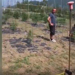 vasco rossi cannabis video