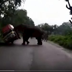 elefante furgoncino india