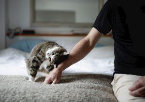 Anche i gatti si affezionano