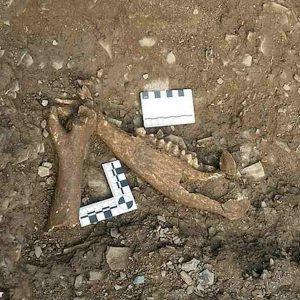 Devon, scoperta macelleria dell'Impero Romano: risale a 1700 anni fa
