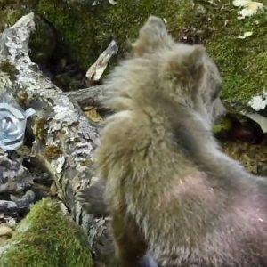 cuccolo orso ritrova la madre