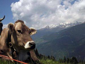 Alto Adige addio: tutte le persone che abitano a Bolzano e provincia sarà solo sudtirolese