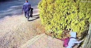 Il cane viene portato via dopo essere stato ucciso