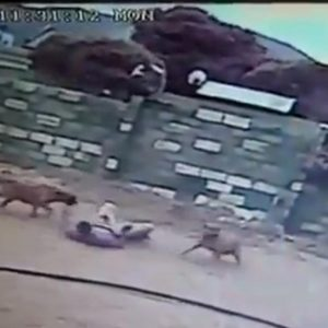 Sudafrica, ladro salta nel cortile cani lo sbranano