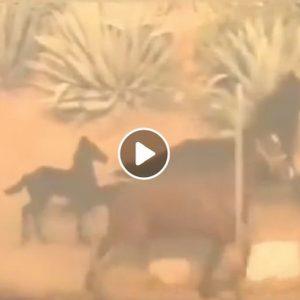 Incendi California: Cavallo torna nel fuoco per salvare puledro e giumenta. Eroe? Non tutti gli umani...