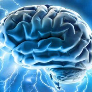 Il cervello umano, Ansa