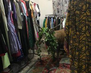 Cortina cervo entra negozio sedato