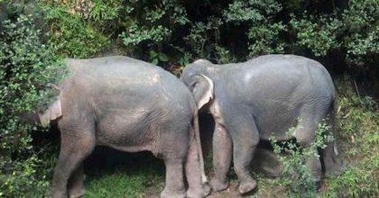 zimbabwe elefanti morti