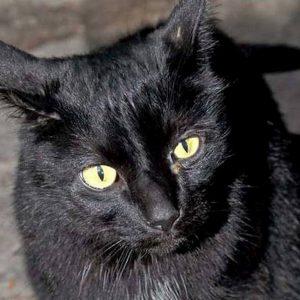 """Halloween, gatti neri a rischio sacrifici, Aidaa: """"Scomparsi 80 in questi giorni"""""""