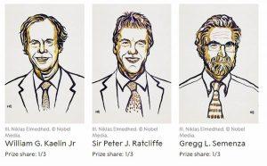 Nobel Medicina 2019 a Ratcliffe, Semenza e Kaelin