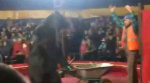 Orso circo russia attacco domatore