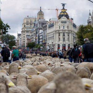 Madrid, festa della Transumanza