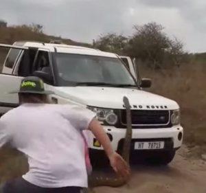 Sudafrica, pitone di 5 metri tenta di salire sul suv di un gruppo di turisti VIDEO