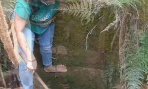 india serpente cobra