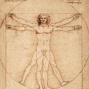 Uomo Vitruviano di Leonardo, Tar del Veneto respinge il ricorso di Italia Nostra: può partire per la Francia