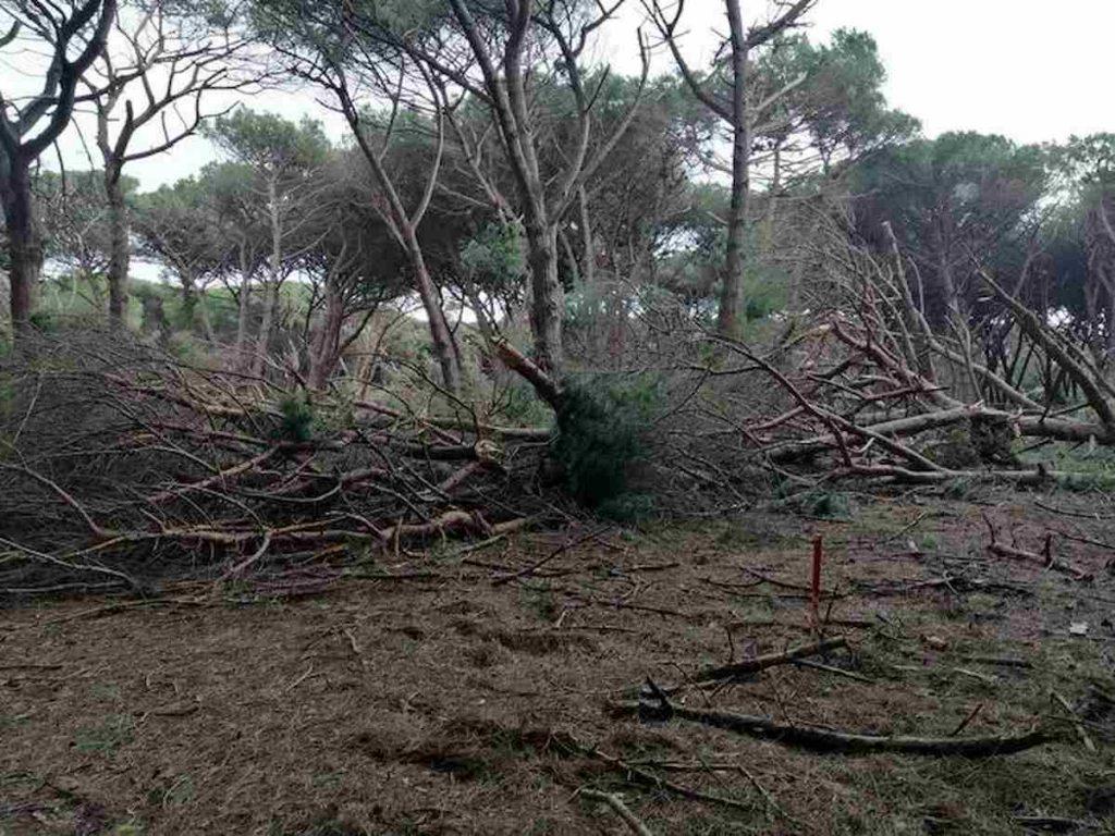 alberi abbattuti riserva duna feniglia