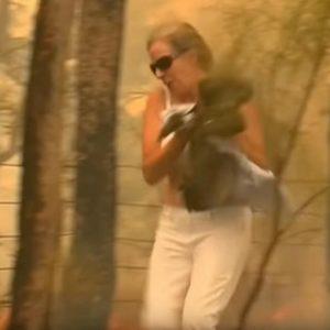 australia, donna salva koala
