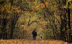 Cani, gridargli contro o punirli con severità li destabilizza e stressa. Il test