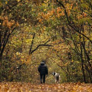 Cani, gridargli contro o punirlo con severità li destabilizza e stressa. Il test