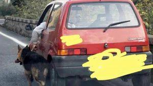 Arpaia, porta a spasso il cane al guinzaglio mentre guida sulla statale. La FOTO che indigna