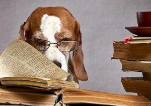 Cani, la formula per calcolare l'età in anni umani: non basta moltiplicare per 7