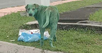 """Malesia, cane ricoperto di vernice verde: la FOTO che commuove il web. """"Lo hanno avvelenato"""""""