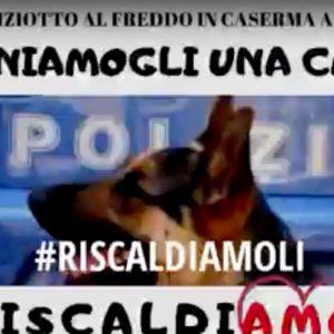 """Bologna, cani poliziotto al freddo: il sindacato lancia una raccolta fondi tra """"sardine"""" e salviniani"""