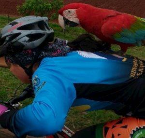 ciclista schiena pappagallo