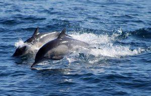 Delfini attaccano e trascinano bimba sott'acqua: salva per miracolo