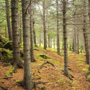 Una foresta, Ansa