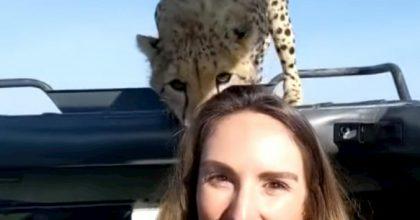 ghepardo safari tanzania