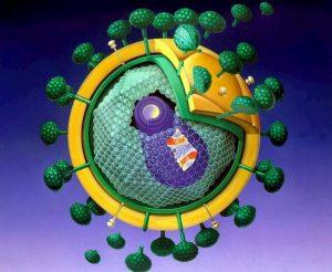 Scoperto nuovo ceppo del virus Hiv