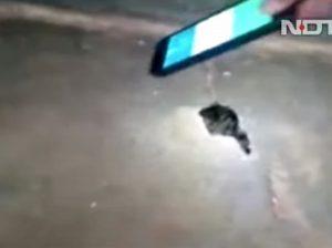 India, bambina di 10 anni muore per il morso di un serpente a scuola
