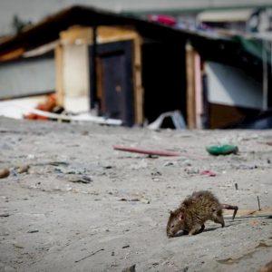 Crotone, topi a scuola: plesso Codignola chiuso per tre giorni
