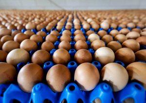 Muore dopo aver mangiato 42 uova crude: era una scommessa con un amico