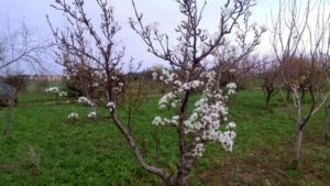 Coldiretti. Alberi già in fiore, ortaggi maturati: la programmazione agricola non serve più
