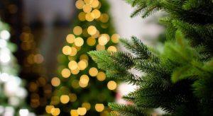Albero di Natale, quello vero meglio di quello finto per il clima