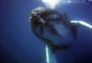 Una balena, Ansa