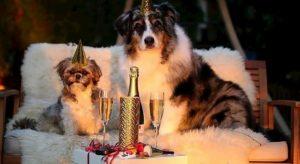 Cani e gatti, vade retro botti di Capodanno: il decalogo anti-panico per ridurre il danno